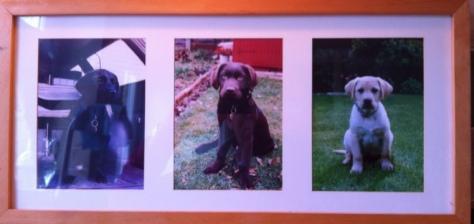 The Puppy Portrait.jpg